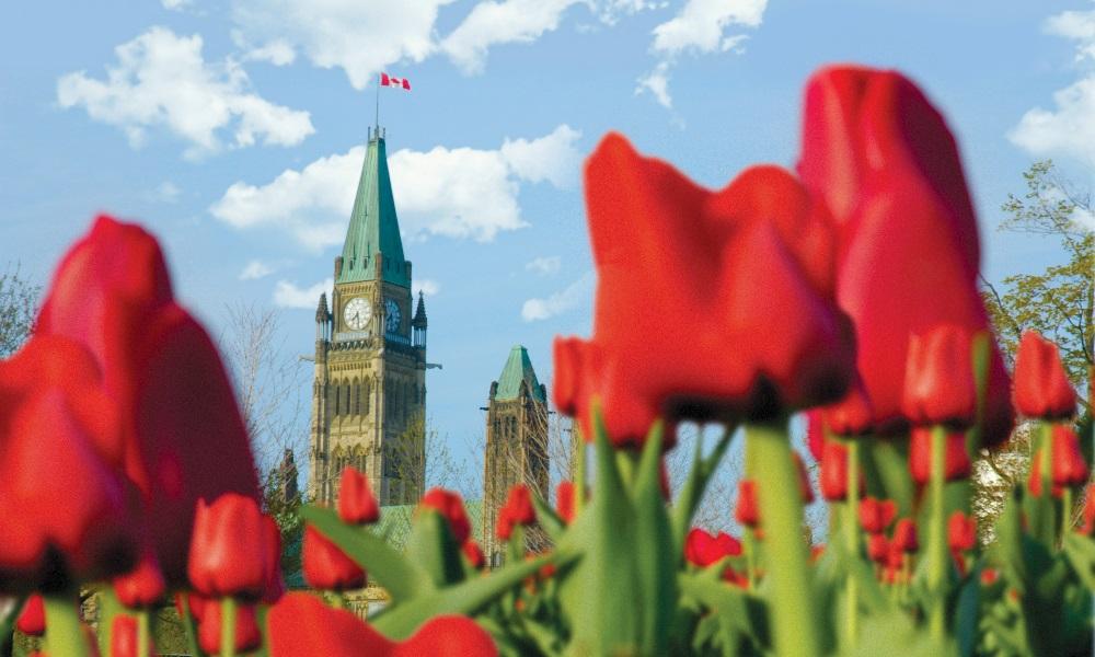 Los 10 imperdibles que ver en Ottawa en verano