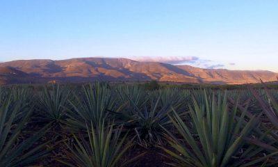 Cuánto cuesta ir a Oaxaca y hacer la ruta del mezcal